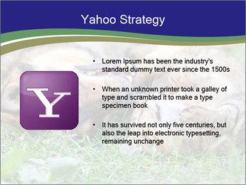 0000077075 PowerPoint Templates - Slide 11