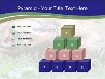 0000077075 PowerPoint Templates - Slide 31