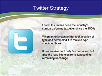 0000077075 PowerPoint Template - Slide 9
