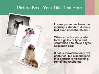 0000077089 PowerPoint Templates - Slide 17
