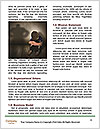 0000077133 Word Templates - Page 4