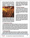 0000077176 Word Templates - Page 4