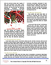 0000077178 Word Template - Page 4