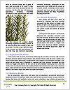 0000077184 Word Templates - Page 4