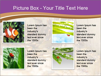 0000077197 PowerPoint Template - Slide 14