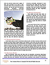 0000077227 Word Template - Page 4