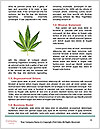 0000077238 Word Templates - Page 4