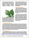 0000077243 Word Template - Page 4