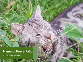 0000077284 PowerPoint Template - Slide 1