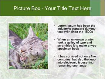 0000077284 PowerPoint Templates - Slide 13