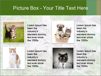 0000077284 PowerPoint Templates - Slide 14
