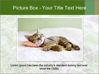 0000077284 PowerPoint Templates - Slide 16