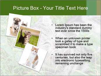 0000077284 PowerPoint Template - Slide 17