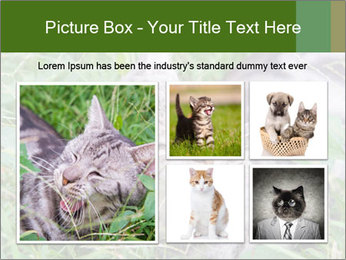 0000077284 PowerPoint Template - Slide 19