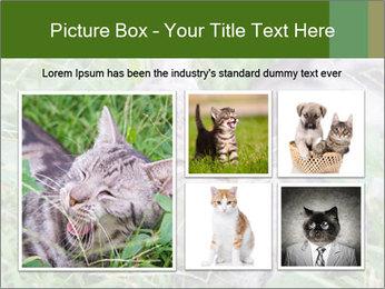 0000077284 PowerPoint Templates - Slide 19