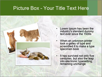 0000077284 PowerPoint Templates - Slide 20