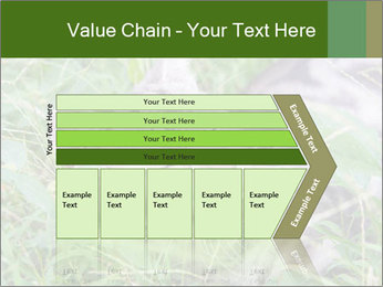 0000077284 PowerPoint Templates - Slide 27