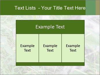 0000077284 PowerPoint Templates - Slide 59