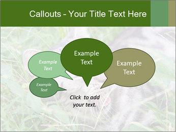0000077284 PowerPoint Templates - Slide 73