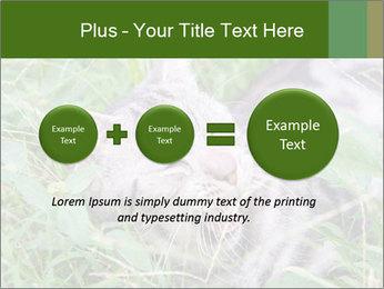 0000077284 PowerPoint Templates - Slide 75