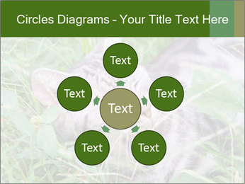 0000077284 PowerPoint Templates - Slide 78