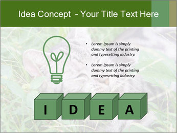 0000077284 PowerPoint Template - Slide 80