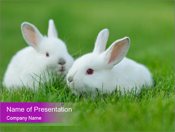 0000077290 PowerPoint Template - Slide 1
