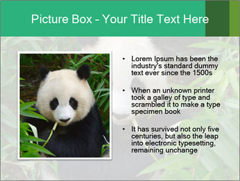 0000077314 PowerPoint Template - Slide 13