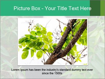 0000077314 PowerPoint Templates - Slide 15
