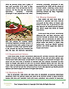 0000077332 Word Template - Page 4