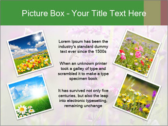 0000077351 PowerPoint Templates - Slide 24