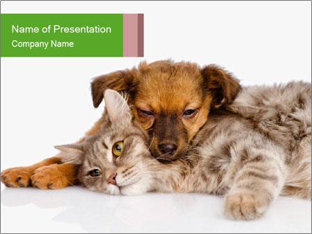 0000077374 PowerPoint Templates