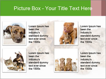 0000077374 PowerPoint Template - Slide 14