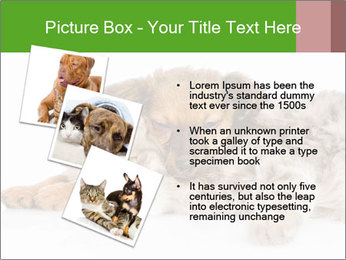 0000077374 PowerPoint Template - Slide 17