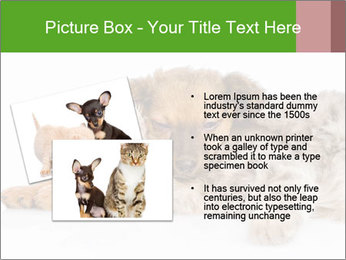 0000077374 PowerPoint Template - Slide 20