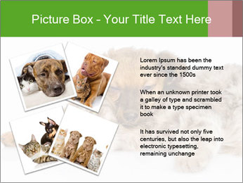 0000077374 PowerPoint Template - Slide 23