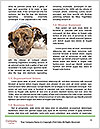 0000077374 Word Template - Page 4