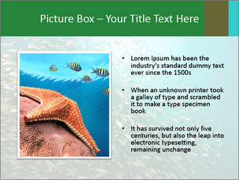0000077379 PowerPoint Template - Slide 13