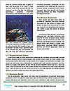 0000077379 Word Template - Page 4