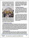 0000077587 Word Template - Page 4