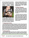 0000077597 Word Templates - Page 4