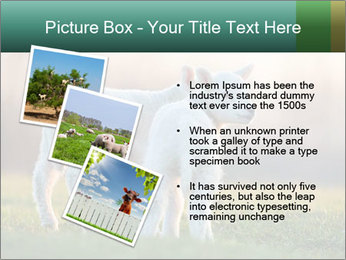 0000077621 PowerPoint Template - Slide 17