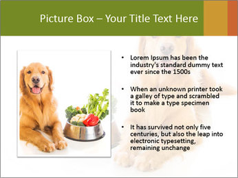 0000077663 PowerPoint Template - Slide 13