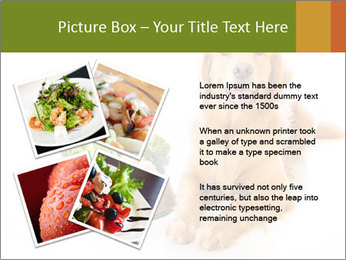 0000077663 PowerPoint Template - Slide 23