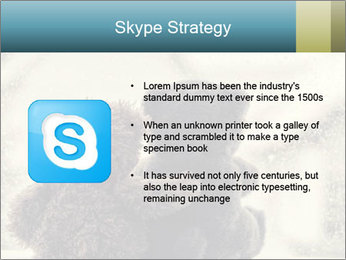 0000077666 PowerPoint Template - Slide 8