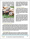 0000077666 Word Template - Page 4