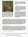 0000077713 Word Templates - Page 4