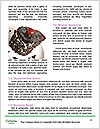 0000077771 Word Template - Page 4