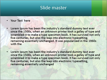 0000077784 PowerPoint Templates - Slide 2