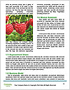 0000077784 Word Templates - Page 4